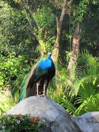 Iberostar Tucan Hotel: wildlife