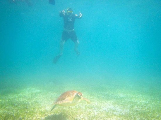 Kayaking Puerto Rico: Sea Turtle on our dive
