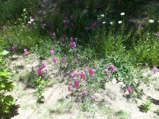 Cabanas Andinas: Flores naturales parte de la belleza de potrerillos