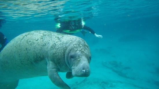 Manatees In Paradise: loved it!