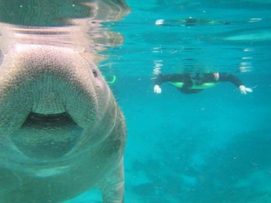 Manatees In Paradise: great tour!