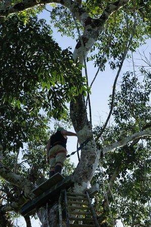 Tiputini Biodiversity Station: canopy walk