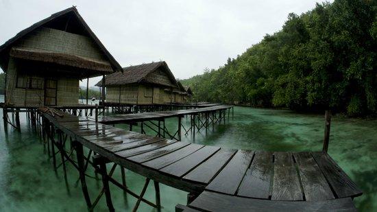 Raja Ampat Doberai Eco Resort: Rear View of our rooms