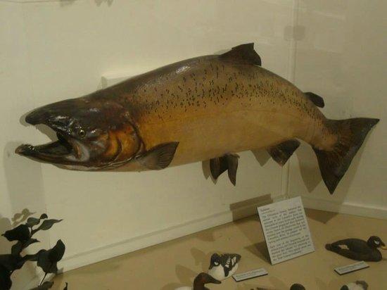 Columbia Pacific Heritage Museum : 4