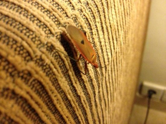 Park Hotel Nusa Dua Suites: big insect in the room