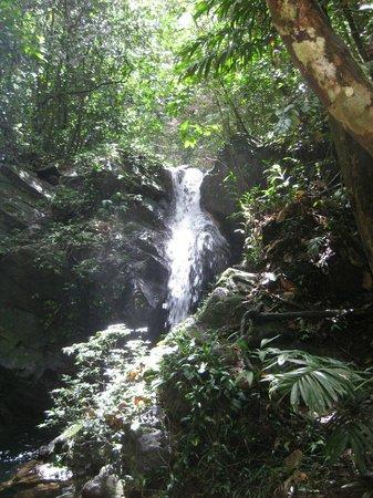 Cockscomb Basin Wildlife Preserve : Waterfall.