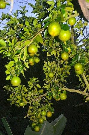 Kalapiti Luxury Jungle Suites: Orchard