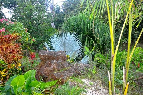 Kalapiti Luxury Jungle Suites: Paradise