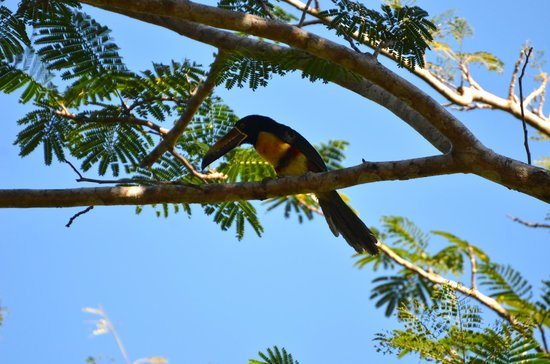 Kalapiti Luxury Jungle Suites : Toucan
