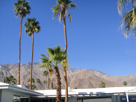 Palm Springs Rendezvous: Another View from the Pool