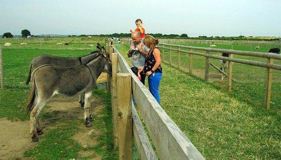 Swithens Farm: Feeding the donkeys