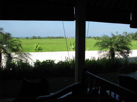Kubu Kedungu: Awesome scenery from living room