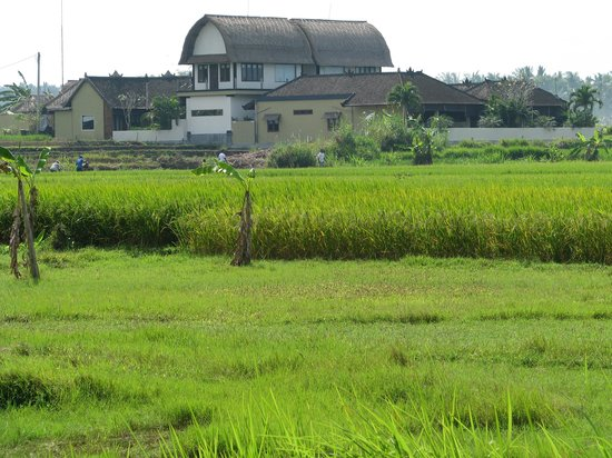 Looking back at Kubu Kedungu