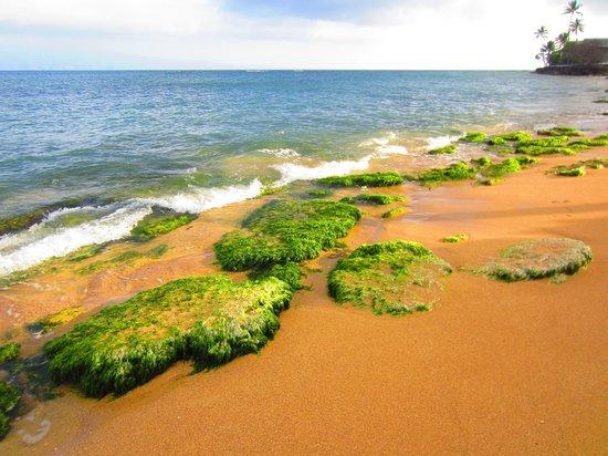 Royal Kahana: Beach