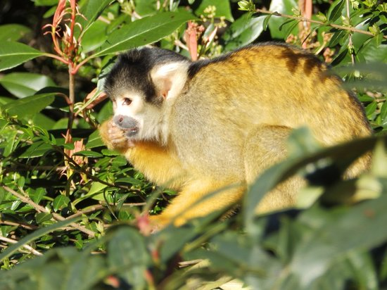 ZSL London Zoo: Squirrel Monkey, one of the best exhibits