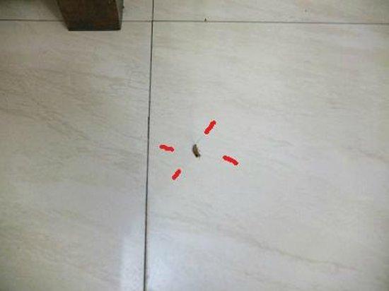 Hotel Lara India: ゴキブリの子供