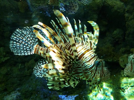 Akwarium Gdynskie MIR: Aquarium Exhibit