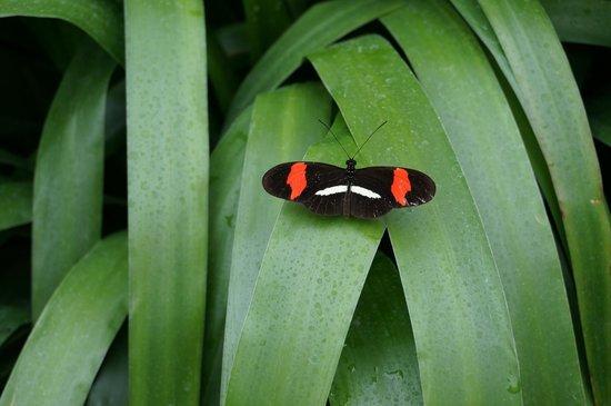 Posada El Quijote: Mer enn 2000 sorter sommerfugler