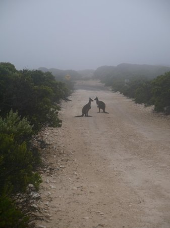 Cape du Couedic Lighthouse Keepers Heritage Accommodation: Early morning on the driveway