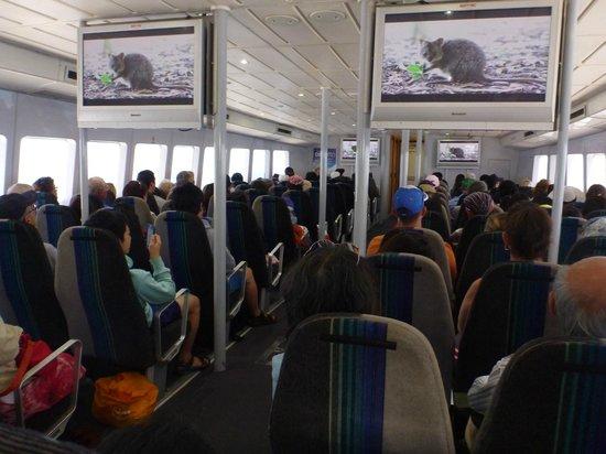 Rottnest Express: 中の座席