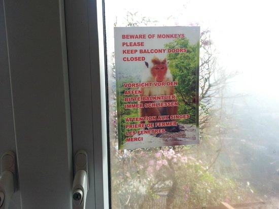 Hotel Hilltop: Beware of Monkeys
