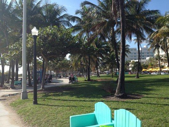 Lummus Park Beach : Love the big palm trees