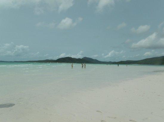 Mantaray Charters: Whitehaven Beach