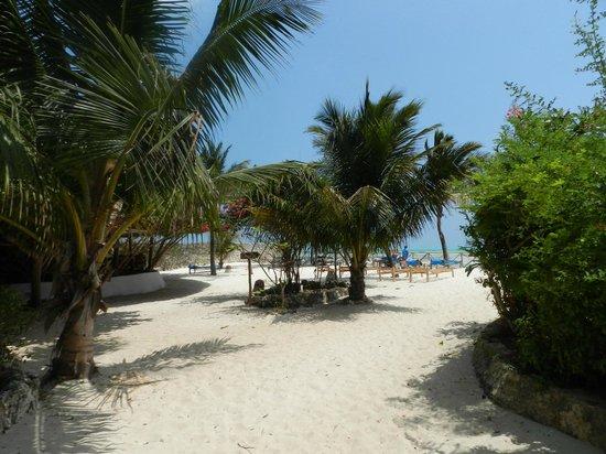 Casa Del Mar Hotel Jambiani : Garten & Strand