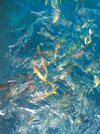 Compass Sailing: Throw some bread to see a lot of fish
