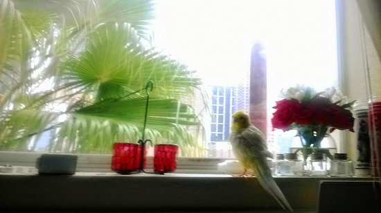 Athens Hotel Suites: My birdy loves the view!