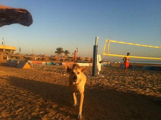 The Breakers Diving & Surfing Lodge: Rosy, der Hund im Kitehouse-Club