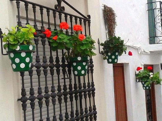 Plaza de las Flores de Estepona: Spotty pots in streets round the Plaza
