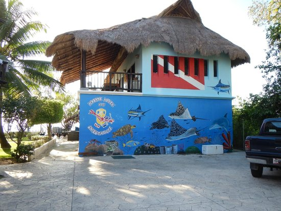 Dressel Divers : the dive shop
