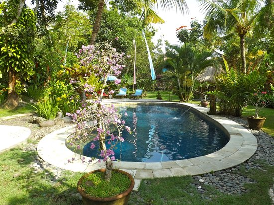 Swasti Eco Cottages : Pool