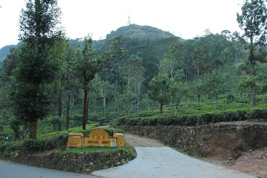 Hanthana Mountain Range: The Hantana Mountain that people hike up
