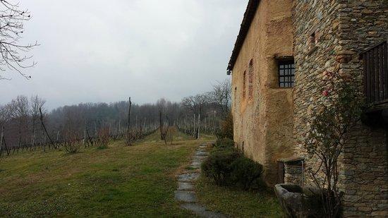 Agriturismo Castello di Bagnolo : Le vigne a vista dalla camera