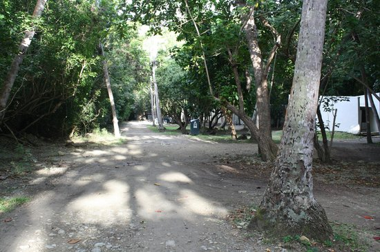 Cinnamon Bay Campground: Main pathway at campground