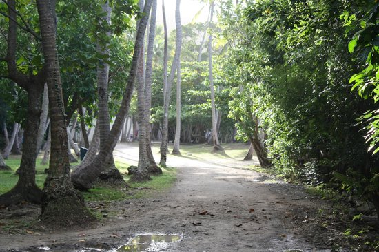 Cinnamon Bay Campground: Main pathway in Campground
