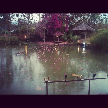 Pai Piranha Fishing Park : The lake