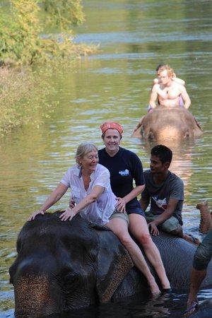ElephantsWorld: Water for Elephants