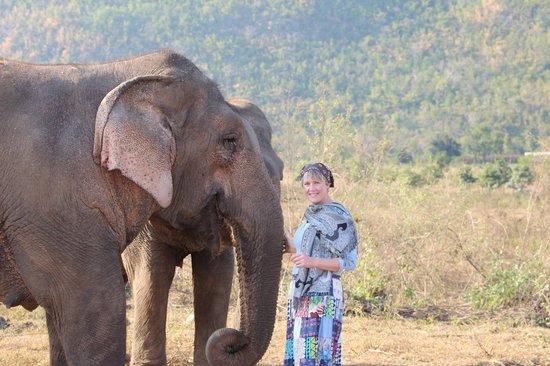 ElephantsWorld: into the wild