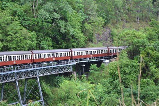 Kuranda, Coach, and Skyrail Tour: riding in the forest