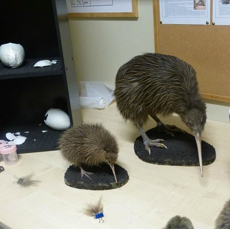 West Coast Wildlife Centre: Models seen in backstage pass