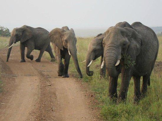 Mara Serena Safari Lodge: Elephants on game drive