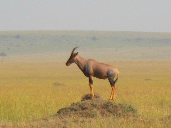 Mara Serena Safari Lodge: Topi seen on game drive