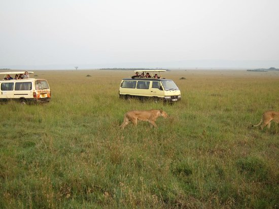 Mara Serena Safari Lodge: Driving around looking at game...here some lions