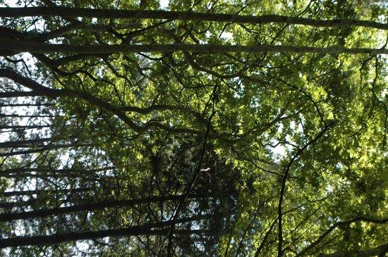 4 Seasons : trees