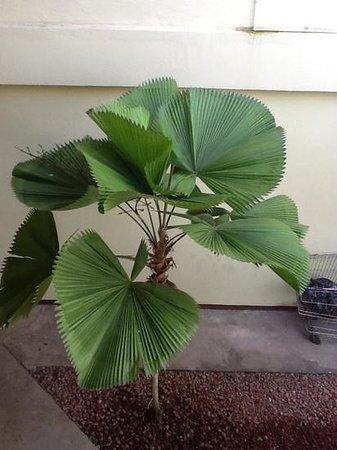 Hotel Mango Mar: fin plante