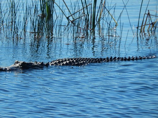 Sawgrass Recreation Park: Checking us out