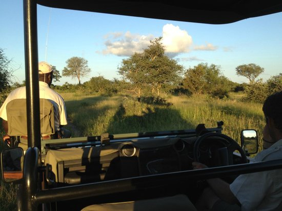 Honeyguide Khoka Moya & Mantobeni Camps: Looking for game